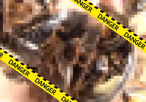 【超閲覧注意】これが恐怖の蟲姦動画!クスコで開いたマンコの中に大量のゴキブリを突っ込むマジキチプレイ