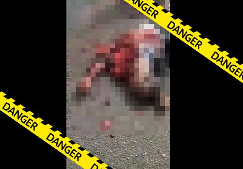【グロ動画】トラックに轢き殺されて身体の外に飛び出した後も脈打つ心臓・・※閲覧注意
