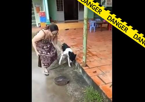 【虐待】キチガイ女さん、言う事を聞かない飼い犬の足をナタで切り落としてしまう・・閲覧注意