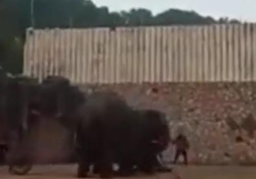 【衝撃映像】ブチ切れた象、制止する飼育員を軽くひねり殺してしまう・・・