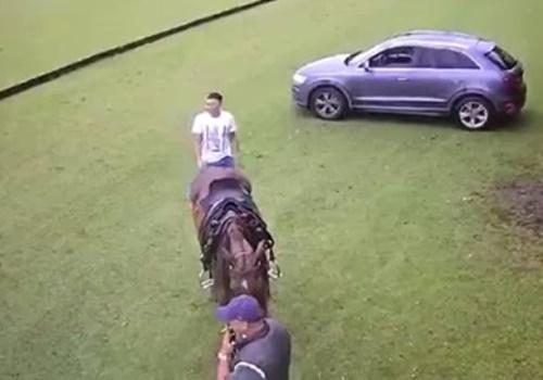 """不用意に馬の後ろ側に立つと""""超""""危険なことがよくわかる映像がこちらwww"""
