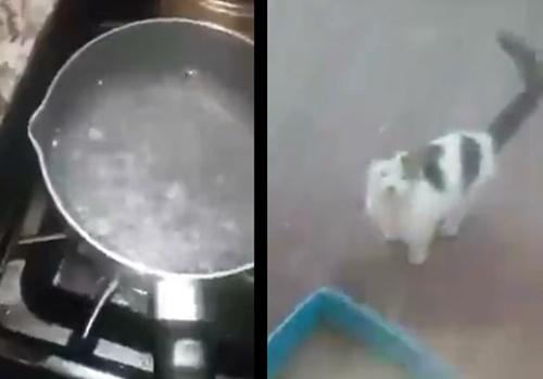 【閲覧注意】猫「ミャアー」猫嫌いオジサン「熱湯ぶっかけてやんよ」⇒ 結果・・・