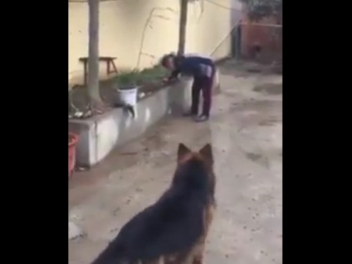 【閲覧注意】中国の若者「ここにいい物があるぞ!!」犬「興味津々...」→ 結果がむごすぎて笑えない・・・