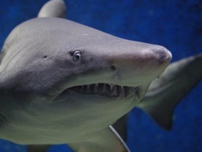 【超閲覧注意】海でサメに襲われた人間がどんな状態になるか...? この1分間の映像をご覧ください