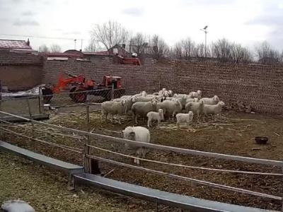 【驚愕】羊、キレるとやばい