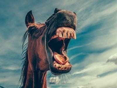 【閲覧注意】野生の馬 vs 乗用車の衝突事故、勝ったのは・・・(動画あり)
