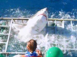 【閲覧注意】海中のサメを間近で観察する「シャークケージ」とかいうけが人続出の超危険なアトラクション