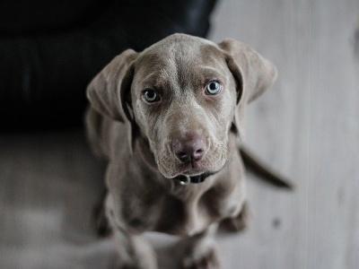 【閲覧注意】食用犬の屠殺場の無修正映像が公開され世界中で話題となってしまう(中国)