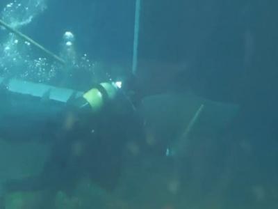 【閲覧注意】妊娠中のサメを救出に向かったダイバー、返り討ちにあってしまう(動画あり)