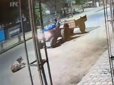 【衝撃映像】農家さん、道を譲らない「牛」にブチ切れしてしまう・・・