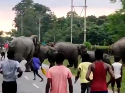 【衝撃】ゾウ、からかわれてブチ切れる・・・(動画あり)