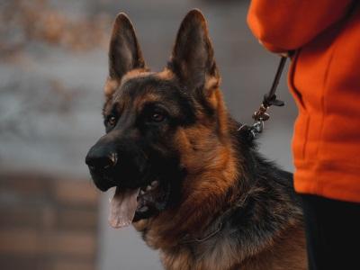 【驚愕】中国の警察犬が無能すぎると話題wwww(動画あり)