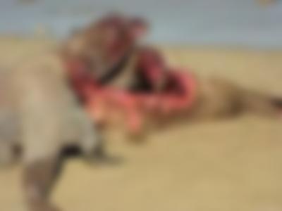 【閲覧注意】地上最強生物の食事風景が怖すぎると話題(動画あり)